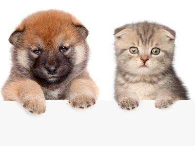 vendita-cuccioli
