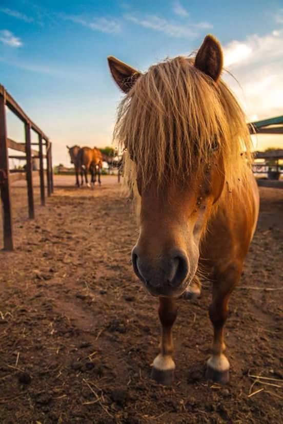 particolare della faccia di un cavallo con frangia
