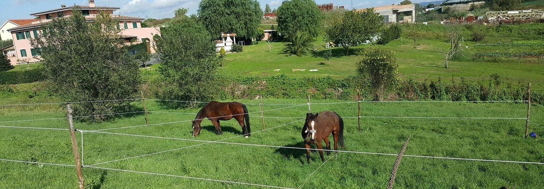 cavalli dentro a un recinto