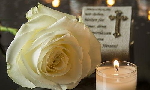 rosa e candela
