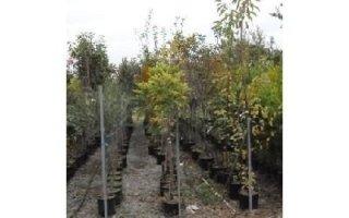 filari di frutti Azienda agricola Vivai Piante