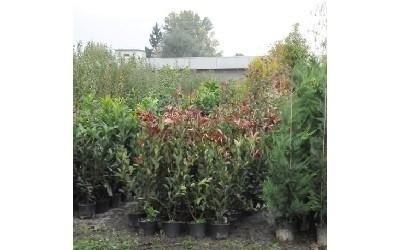 Composizioni giardino Azienda agricola Vivai Piante
