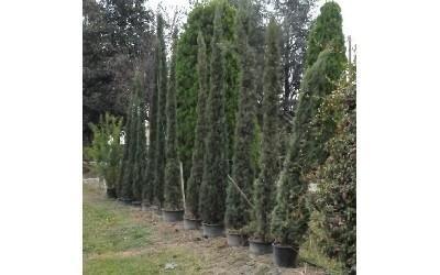 Alberi da giardino reggio emilia azienda agricola for Arbusti ornamentali da giardino