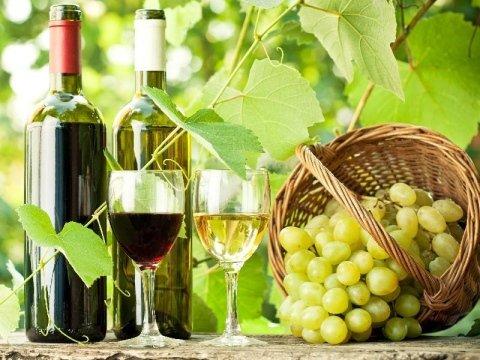 viticoltura biologica Azienda agricola Vivai Piante