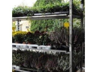 carrello fioritura Azienda agricola Vivai Piante