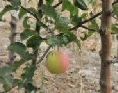 frutteto Azienda agricola Vivai Piante