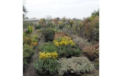 Cespugli da giardino Azienda agricola Vivai Piante