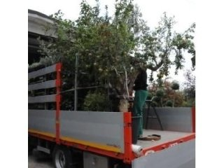 carico camion Azienda agricola Vivai Piante