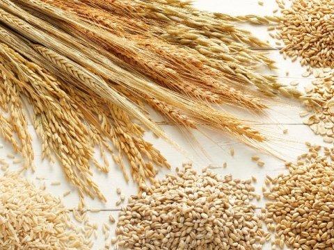 grano antico Azienda agricola Vivai Piante