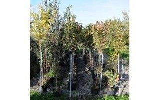 produzione piante da frutto Azienda agricola Vivai Piante
