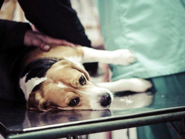 Vaccinazione cani