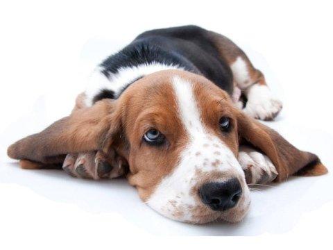 Visite veterinarie per cani