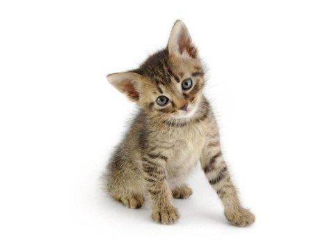 Visite veterinarie per gatti