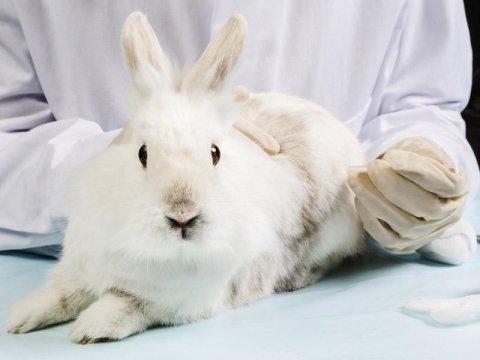 Vaccinazione conigli