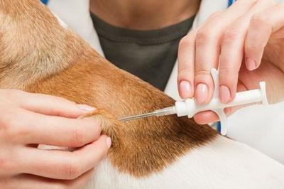 Applicazione microchip per animali domestici