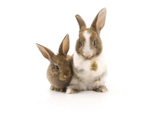 Visite veterinarie per conigli