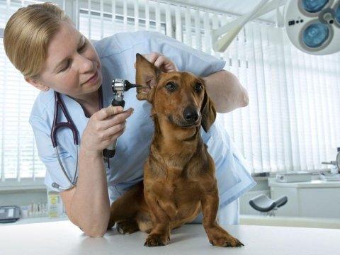Visite specialistiche per cani