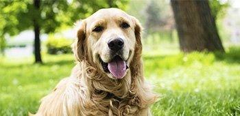 articoli per cani