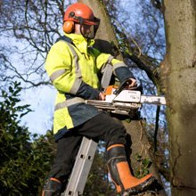 tree surgeon cutting the tree