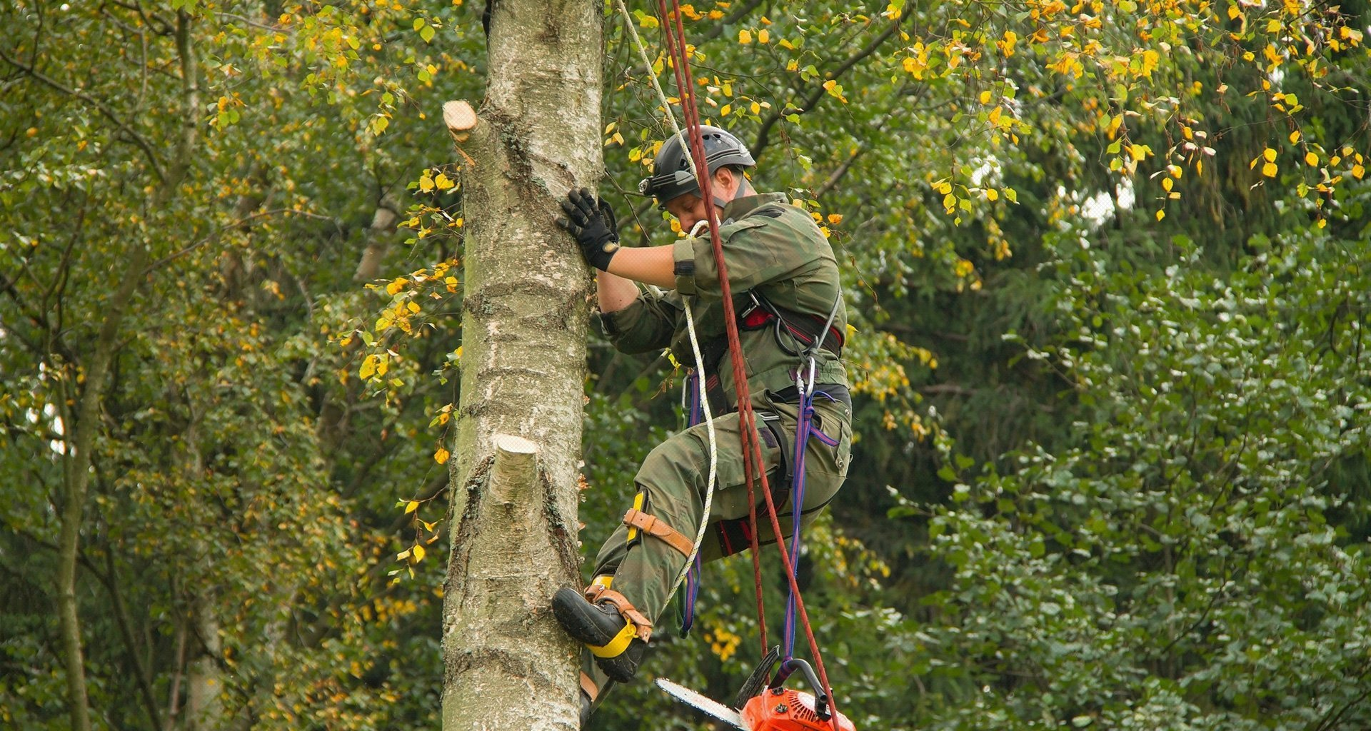 a tree cutting service