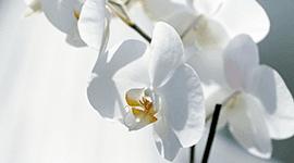 allestimenti floreali matrimoni serracapriola