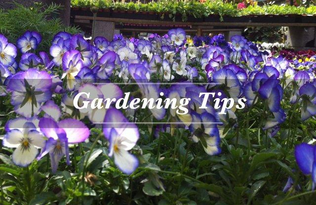 Garden Center San Francisco, CA