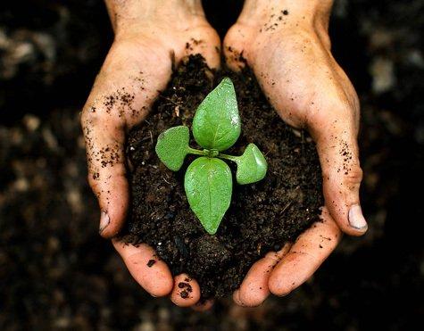 Soil Amendments San Francisco, CA