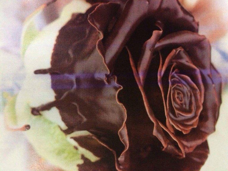 rosa marrone