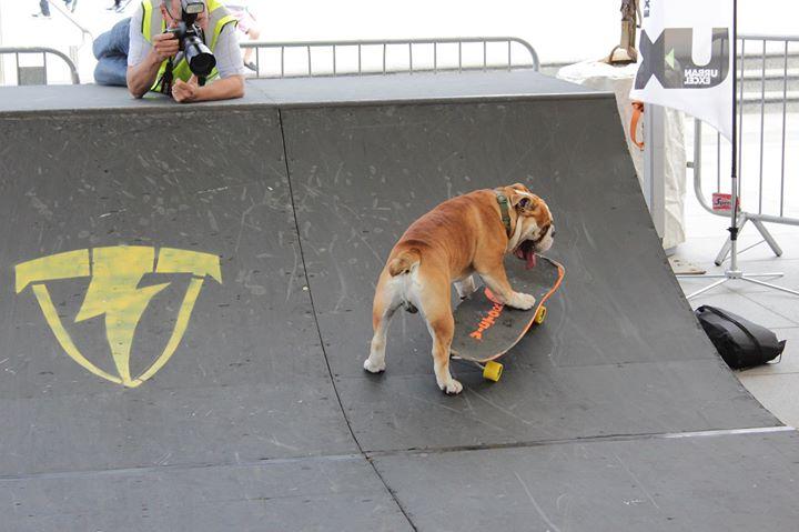 Skateboard dog belfast