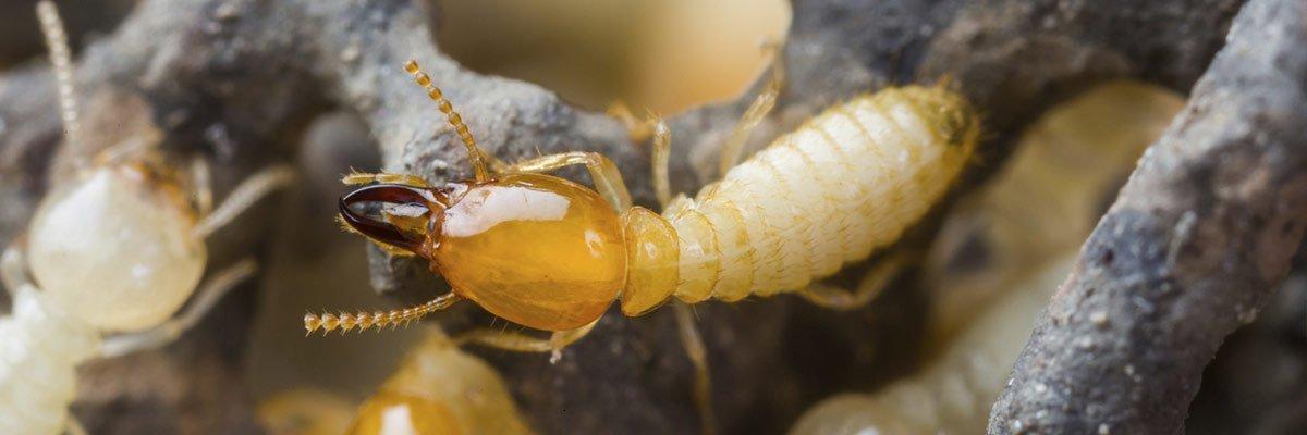 Termite maintenance Noosa