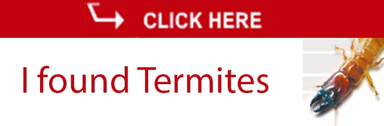 expect the best pty ltd i found termite icon