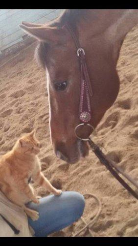 un cavallo si avvicina un gatto