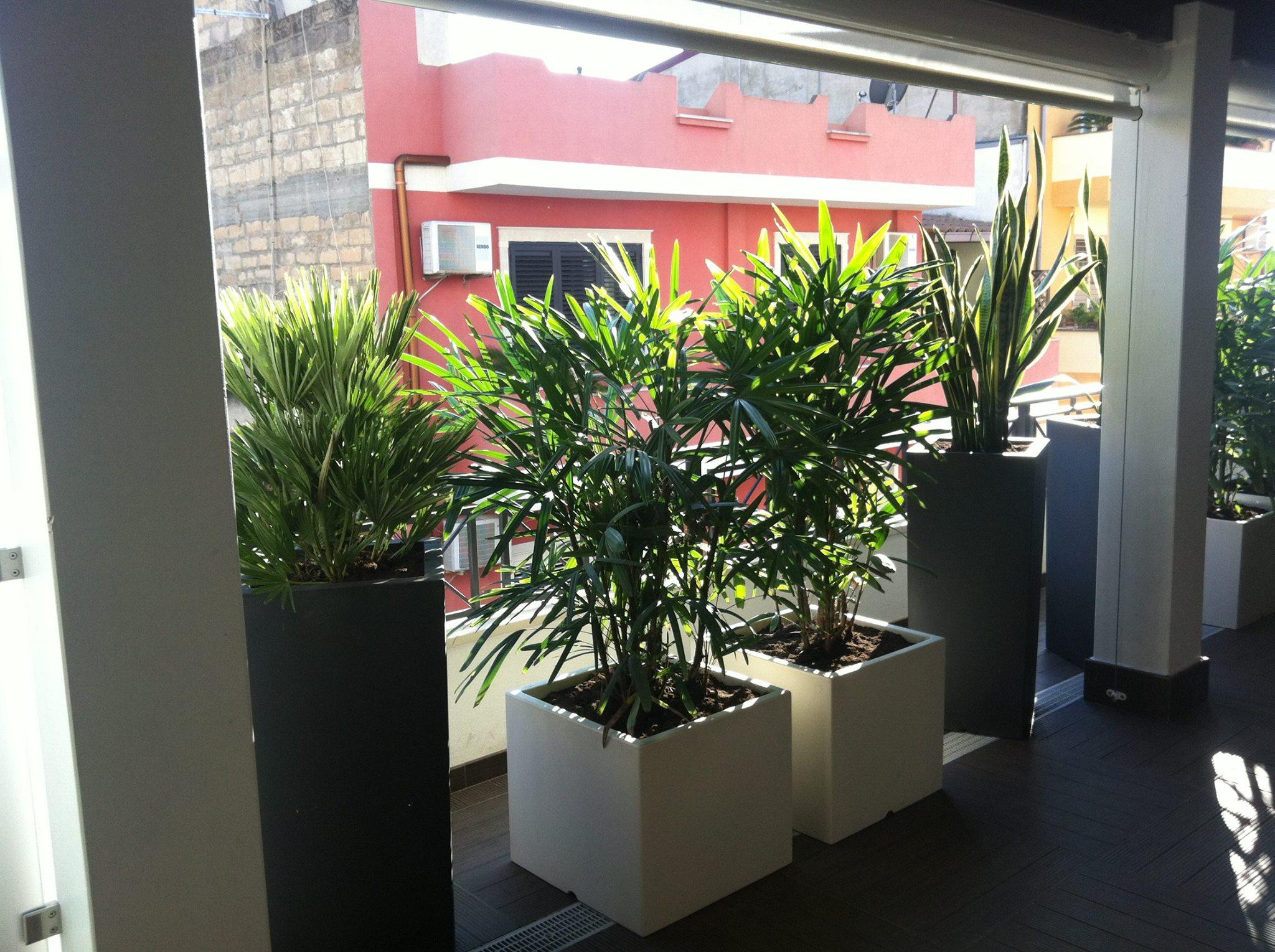 piante in basi quadrati