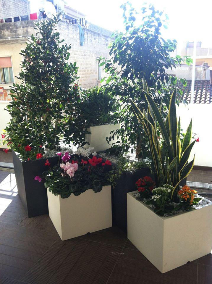 varie piante in vasi bianchi