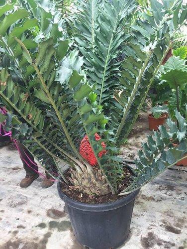 pianta da esterno in un vaso nero