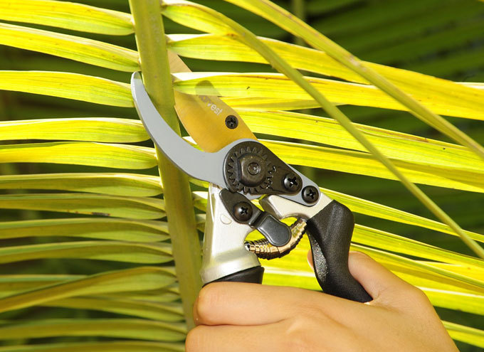 professional pruning shears