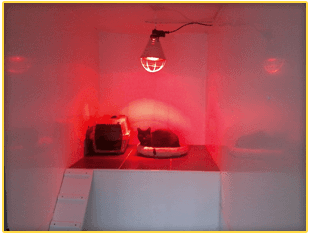 Heated cattery facilities