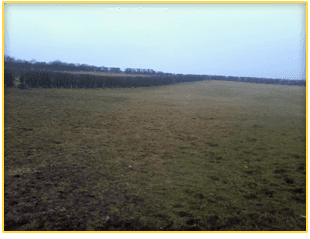 Spacious field for dog walking