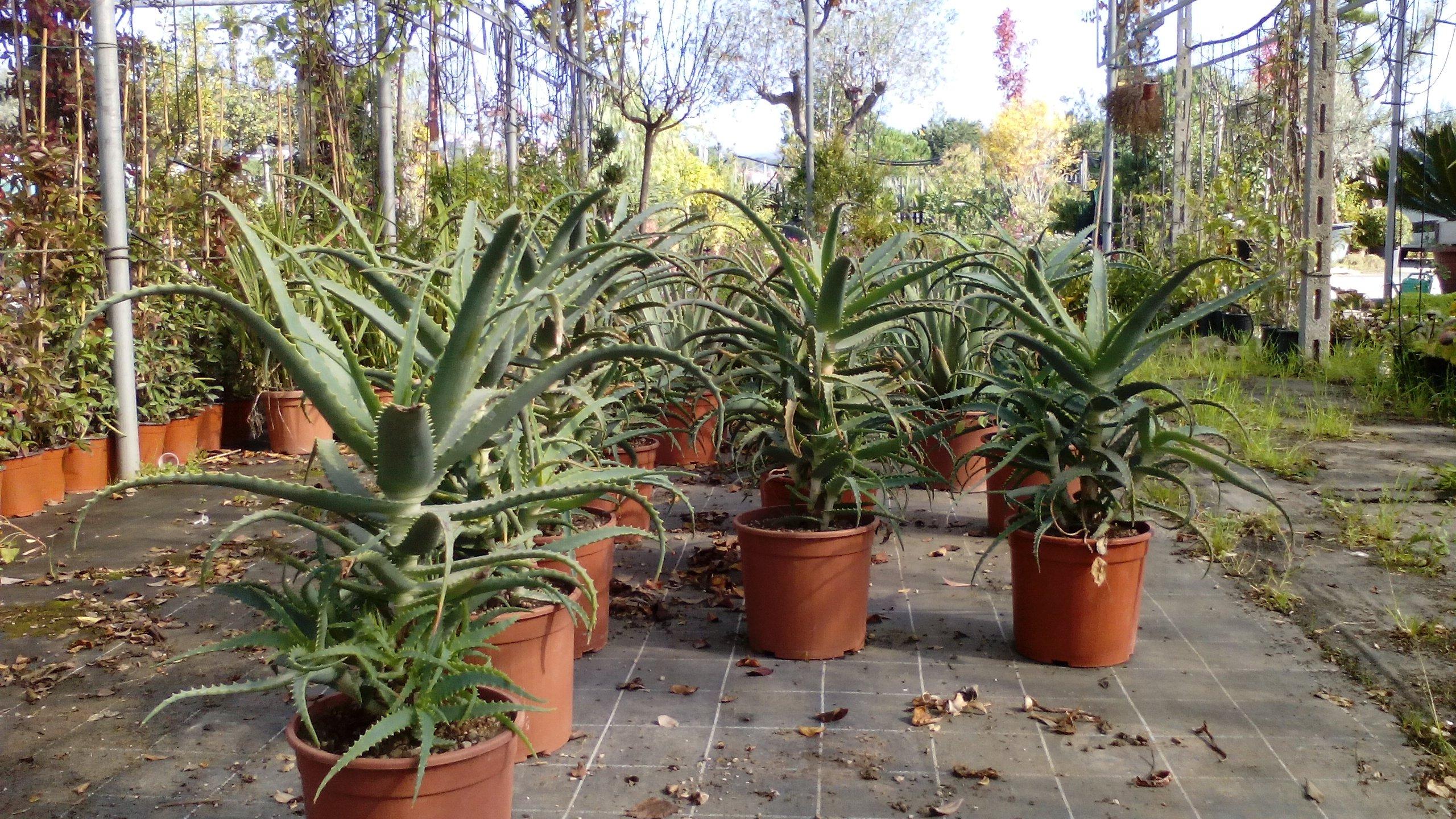 piante in vaso in esterno