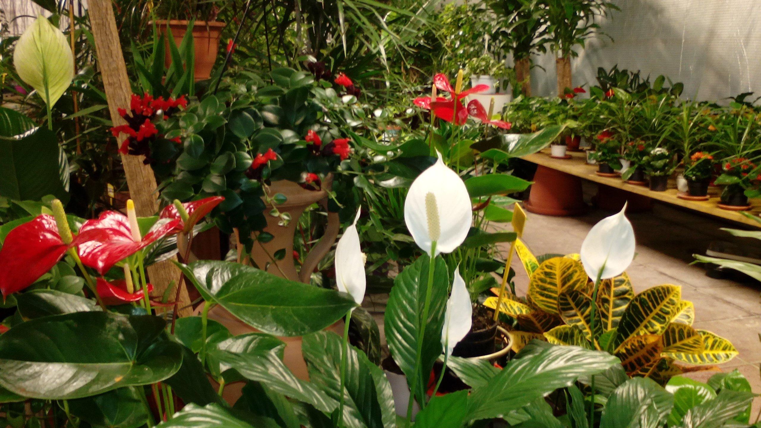piante in fiore