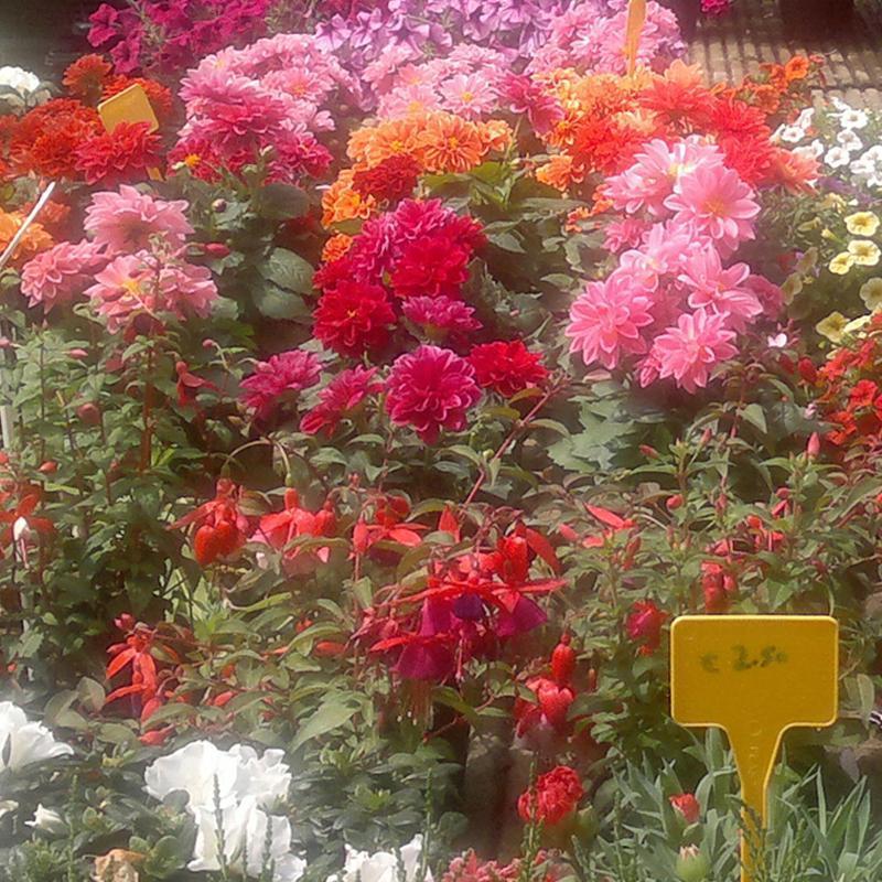 un  insieme di fiori rossi rosa e arancioni
