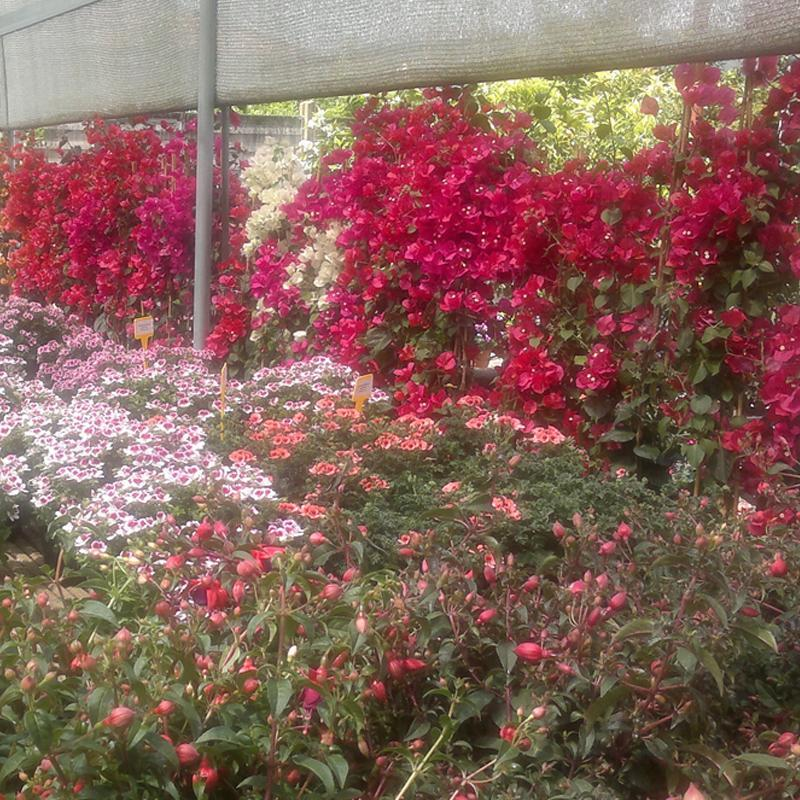 un insieme di piante fiorite bianche, viola, rosa e rosse