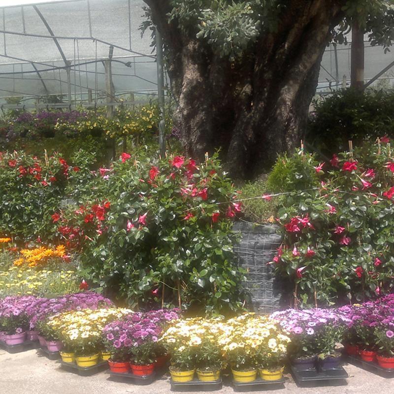 dei vasi di fiori colorati e un tronco di un grande albero