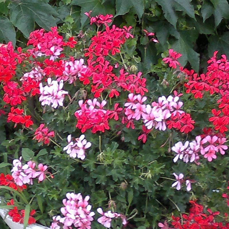 dei fiorellini bianchi,rosa e rossi e delle foglie