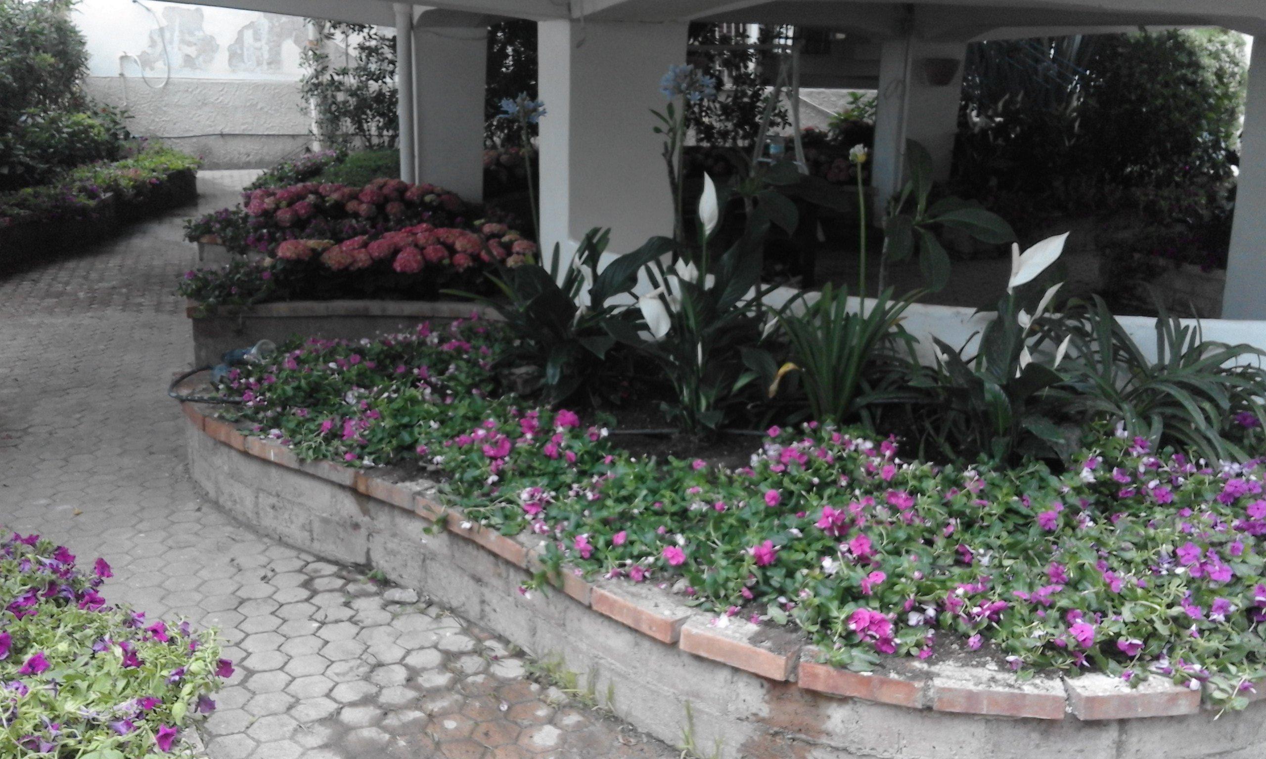 un muretto e dietro delle piante e dei fiori viola interrati