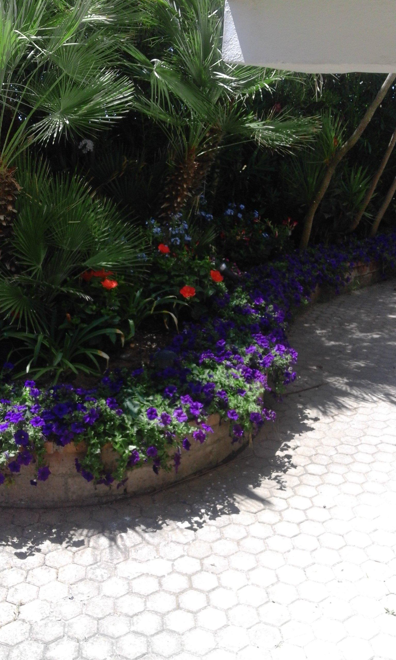 dei fiori viola, rossi e una palma interrati dietro a un muretto