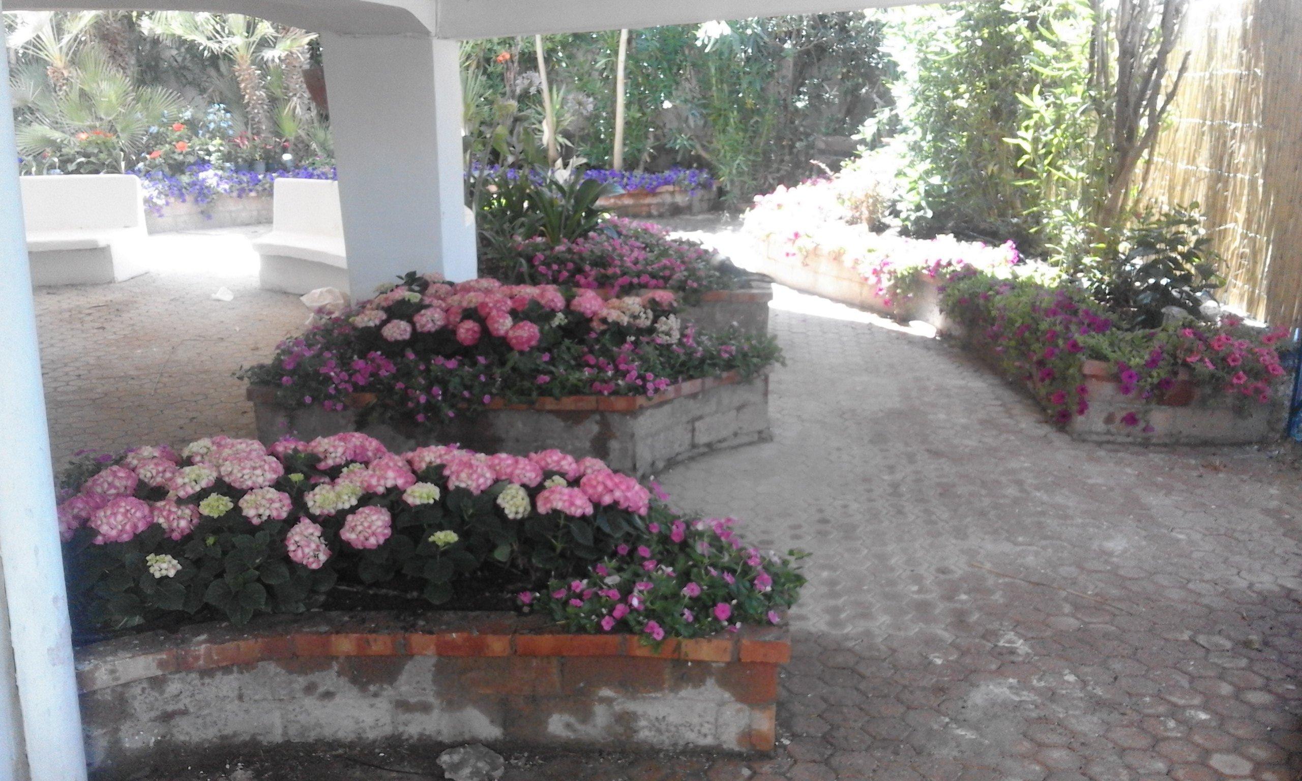 delle ortensie rosa interrate dietro a dei muretti sotto un androne