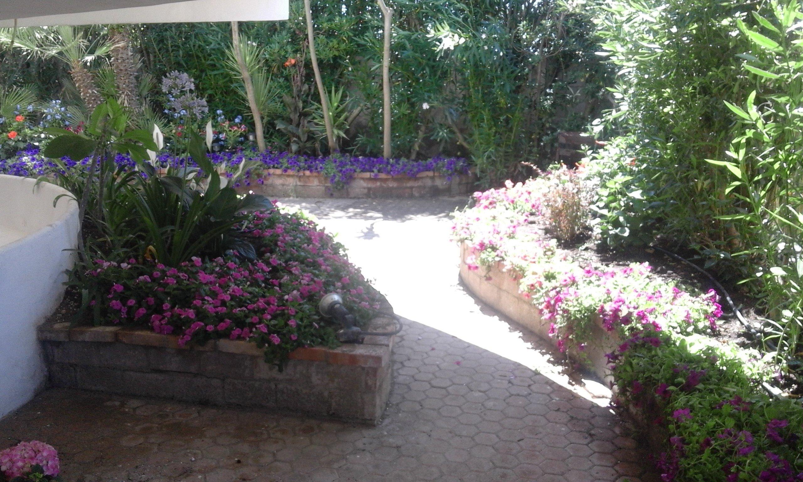 dei fiori viole e altre piante interrate dietro a dei muretti