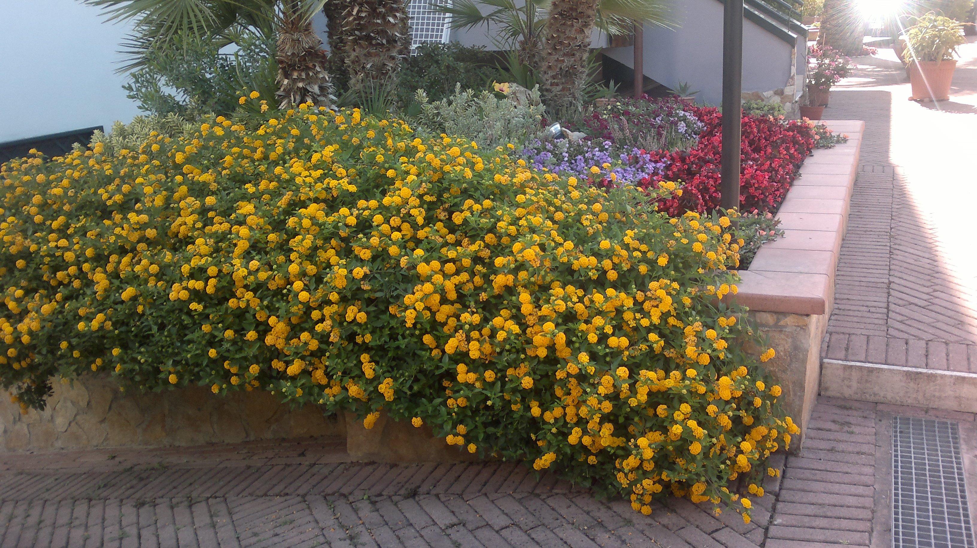dei fiori gialli,dietro delle palme e dei fiori viola e rossi