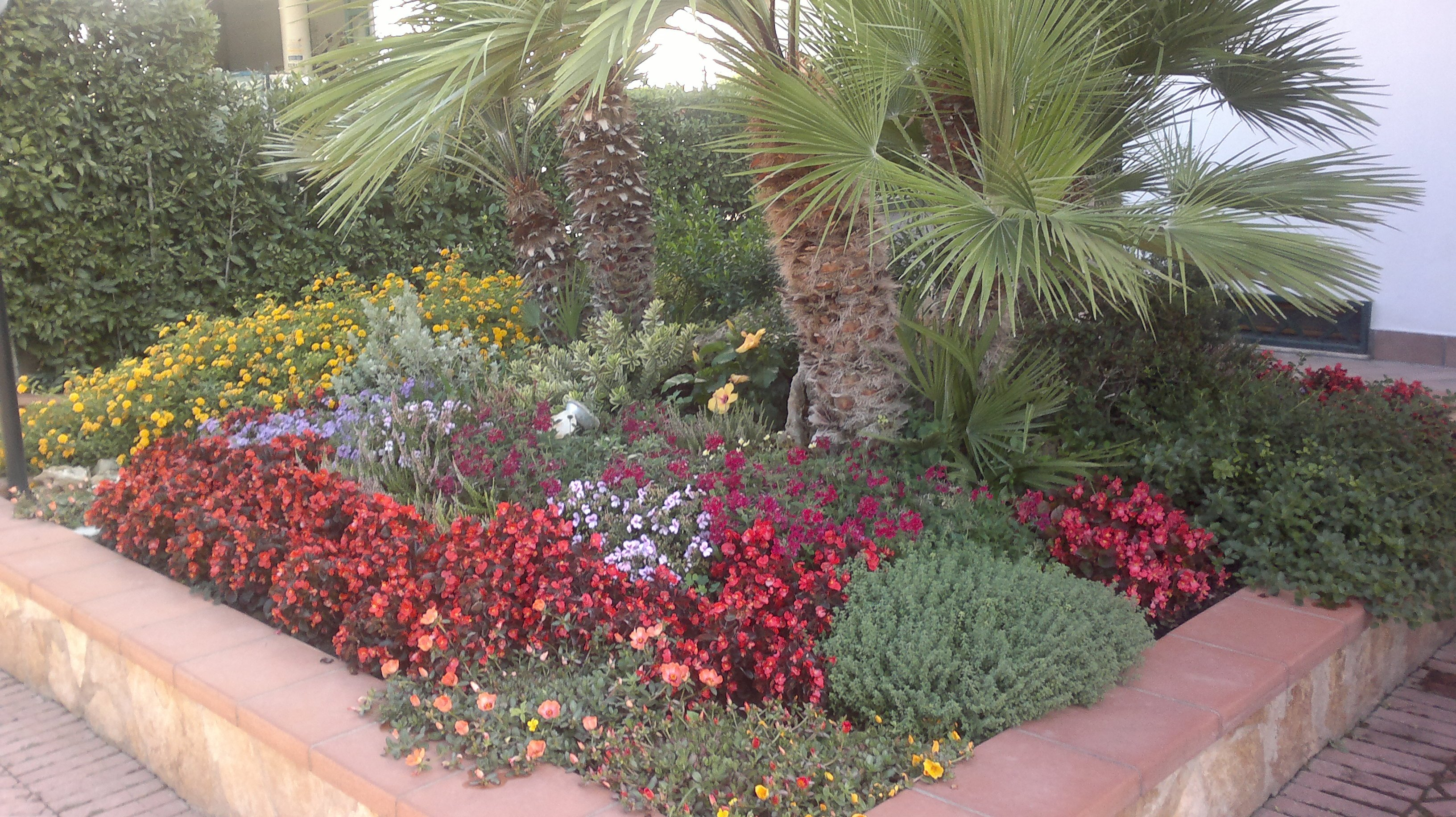dei fiori rossi gialli e viola e una palma interrati dietro a un muretto in un'aiuola